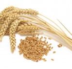 tumblr_static_transparent_wheat